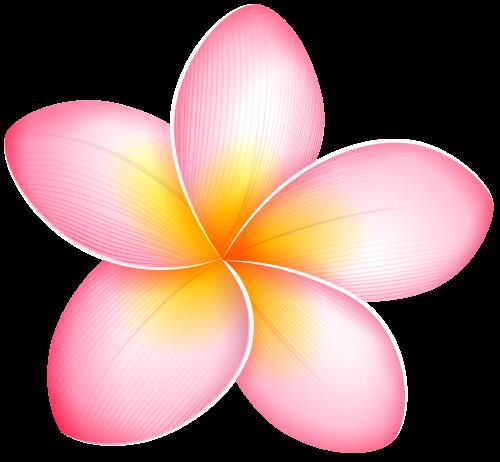 frangipani PNG Images.