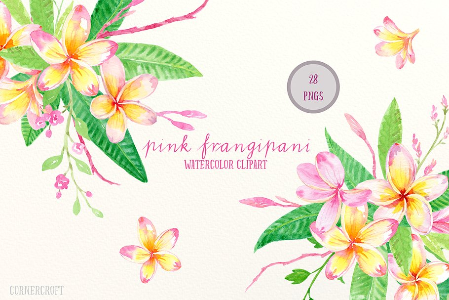 Pink Frangipani Clip Art Watercolor ~ Illustrations.