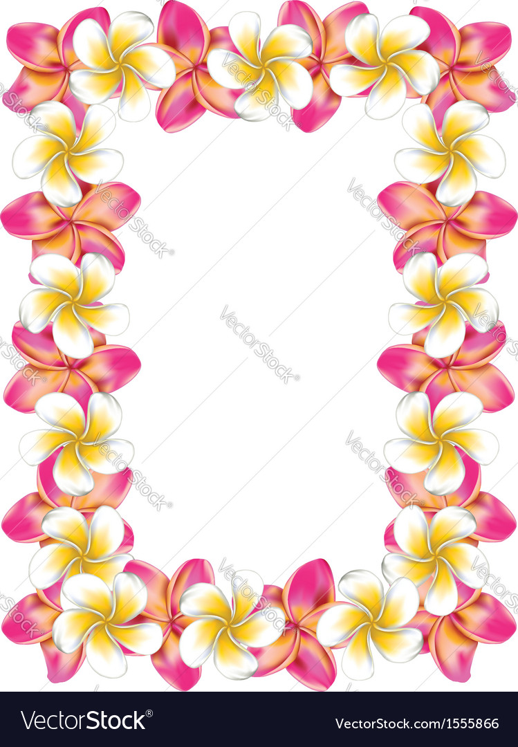 White and pink frangipani flowers frame.