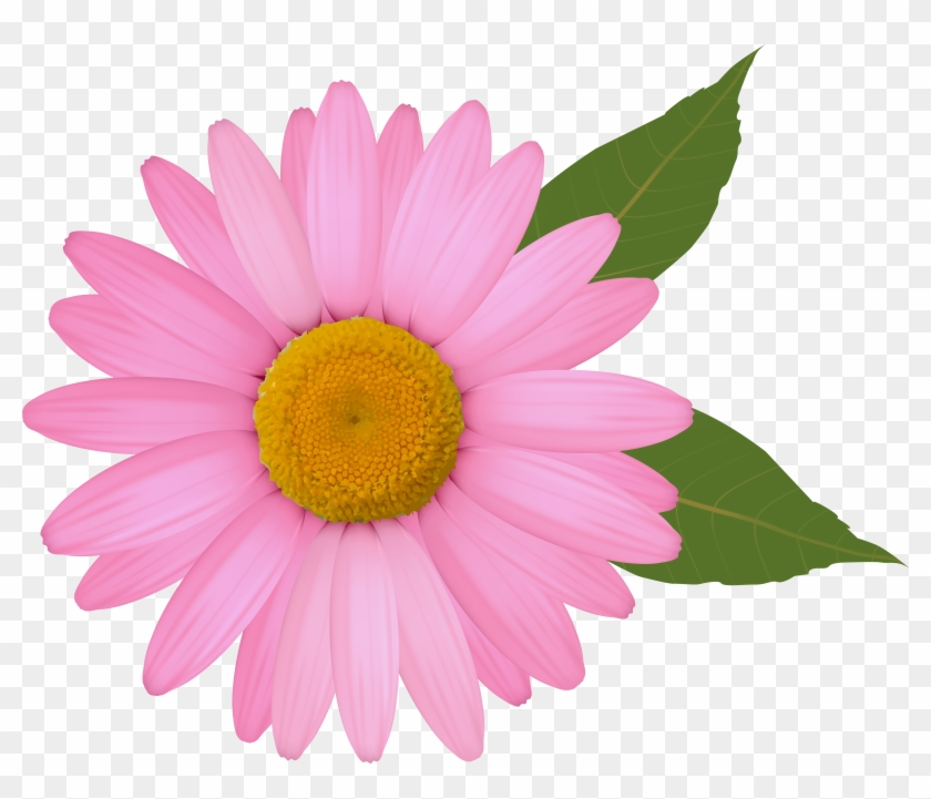 Pink Daisy Png Clipart Image.