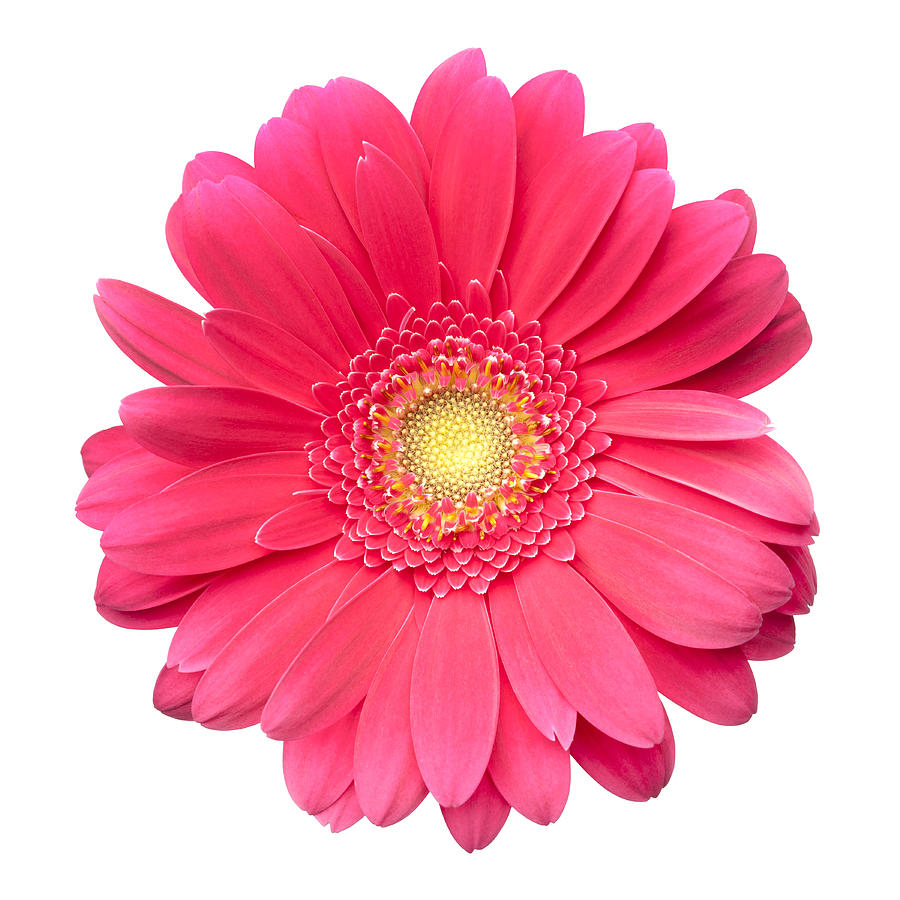 Gerber Daisy Clipart Group with 84+ items.