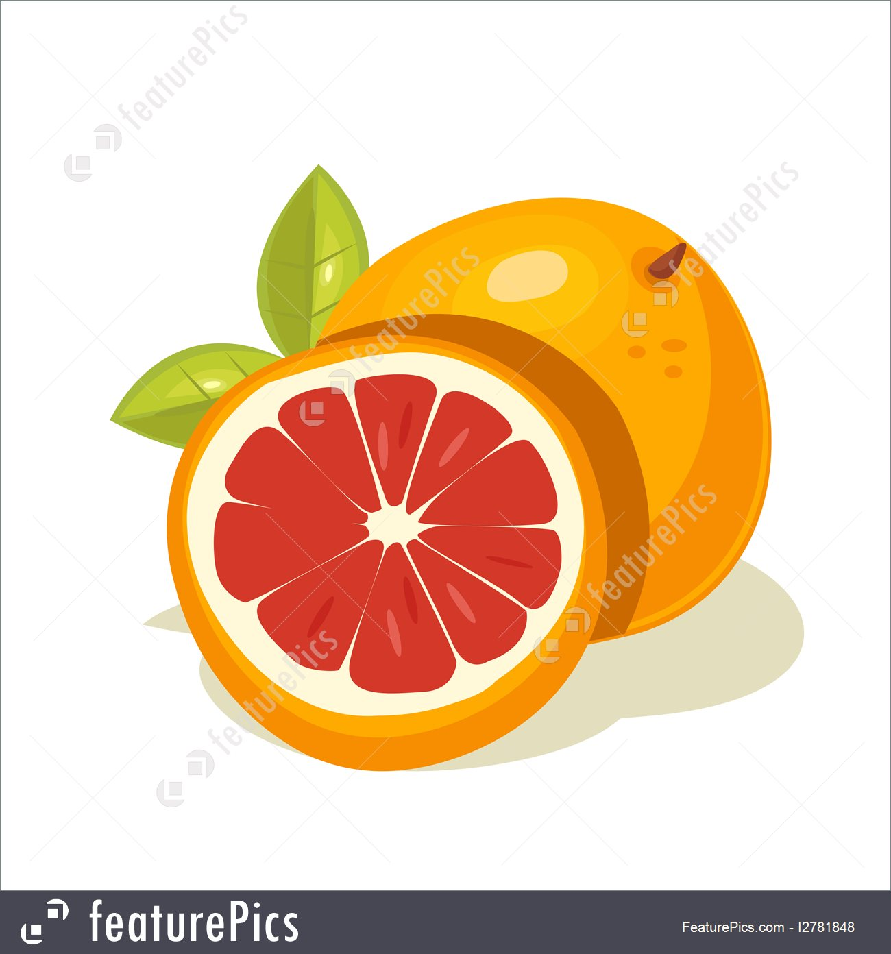 Grapefruit Clip Art Illustration.