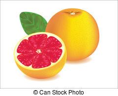 Pink grapefruit Illustrations and Clip Art. 218 Pink grapefruit.