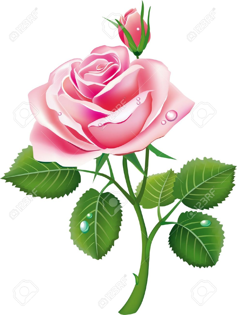Beautiful Pink Rose Flowers Clipart.