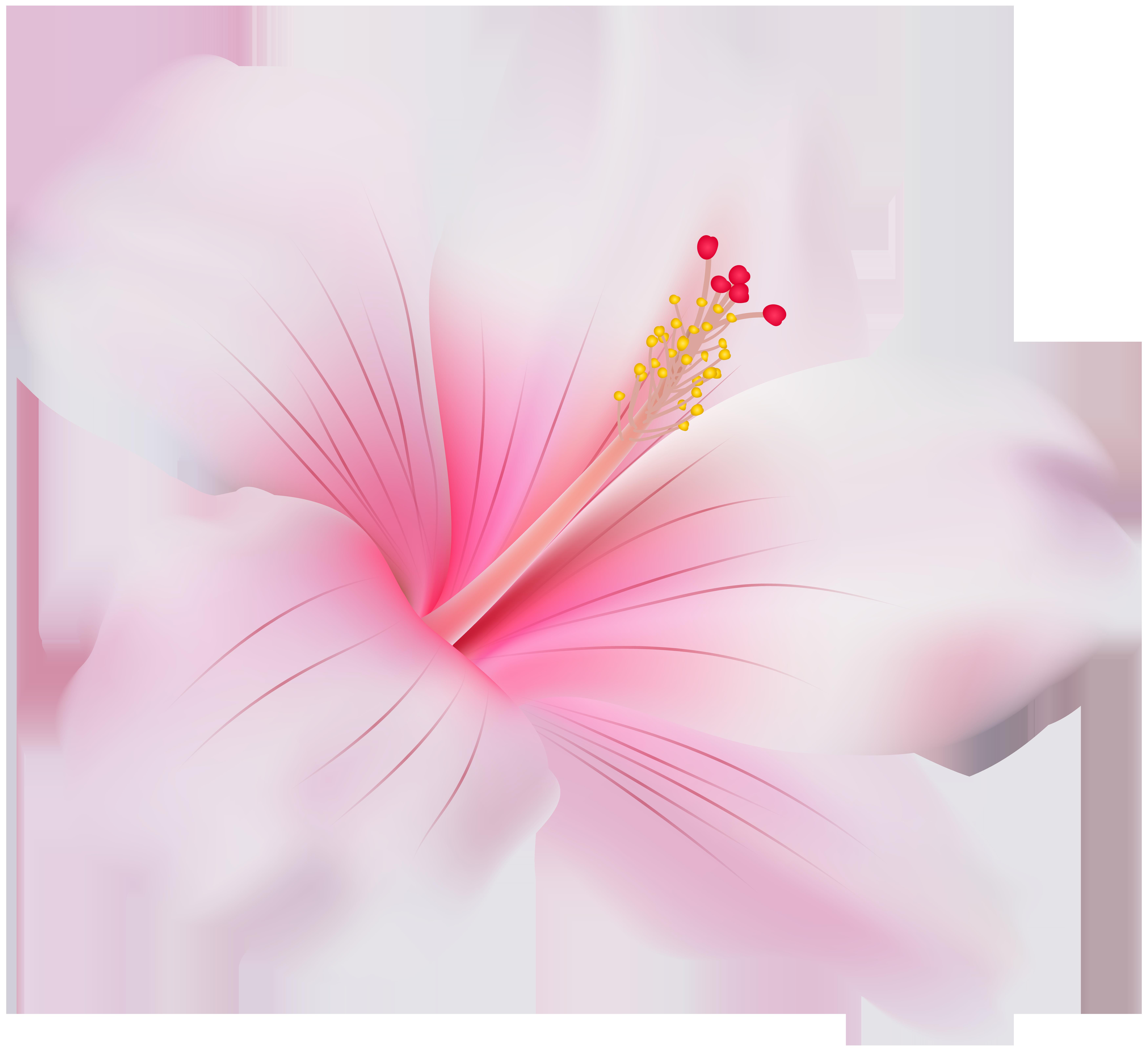 Pink Hibiscus PNG Clip Art.