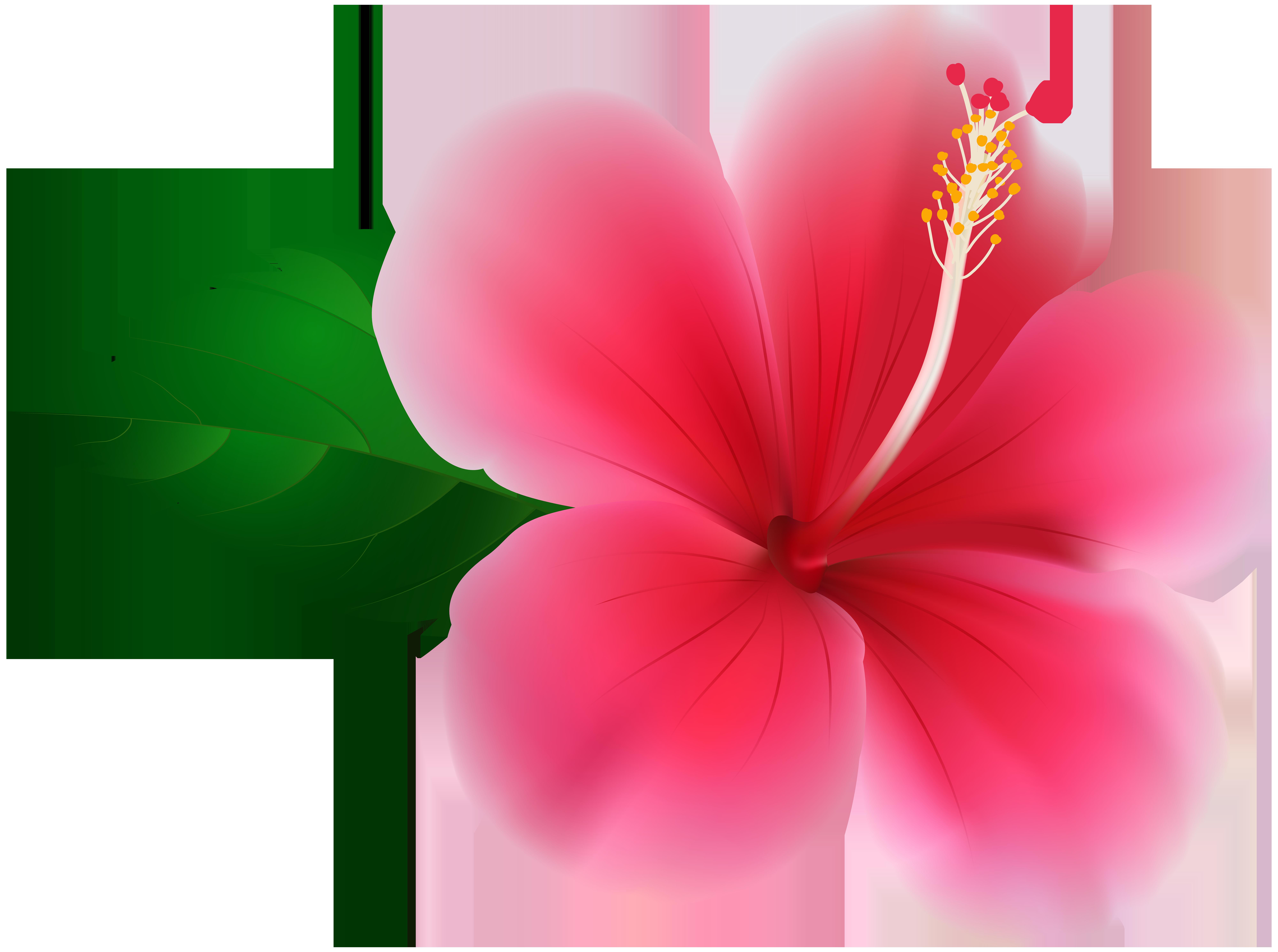 Pink Hibiscus PNG Clip Art Image.