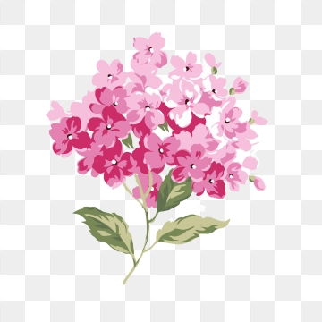 Hydrangea PNG Images.