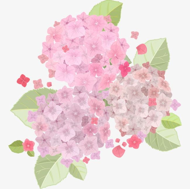 Fresh And Beautiful Light Pink Hydrangea PNG, Clipart.