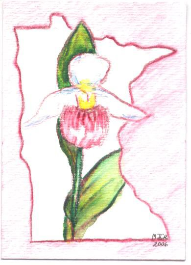 minnesota lady slipper flower botantical drawing.