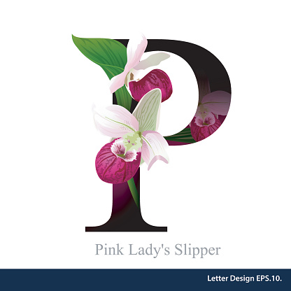 Pink Lady Slipper Clipart Clipground