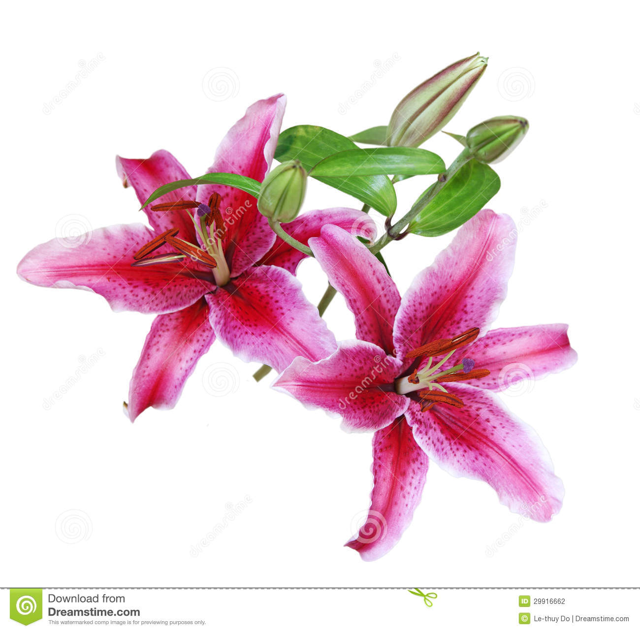 Lilies clipart.