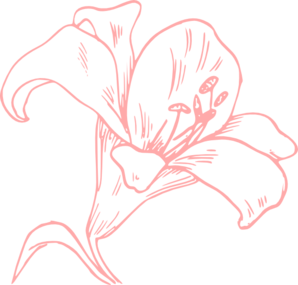 Pink Lily Clip Art at Clker.com.