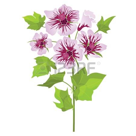 766 Mallow Stock Vector Illustration And Royalty Free Mallow Clipart.