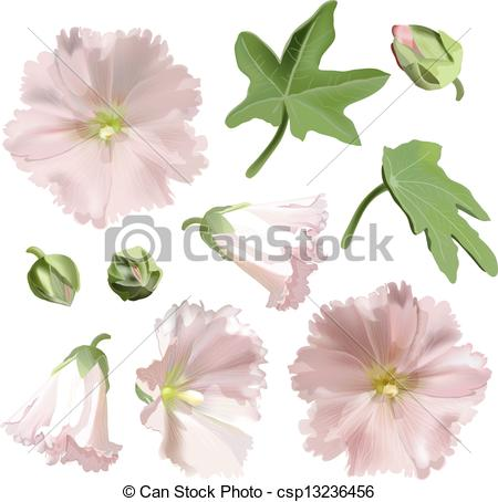 Clipart Vector of Set of Pink mallow flowers on white background.