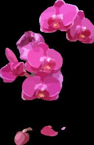Pink Orchids Clip Art at Clker.com.