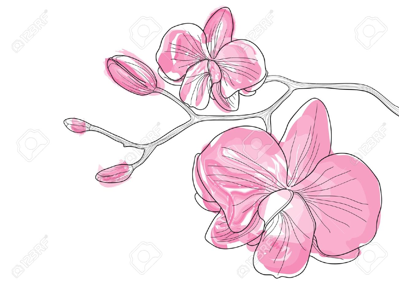 Vector Illustration Of Pink Orchid Flowers Royalty Free Cliparts.