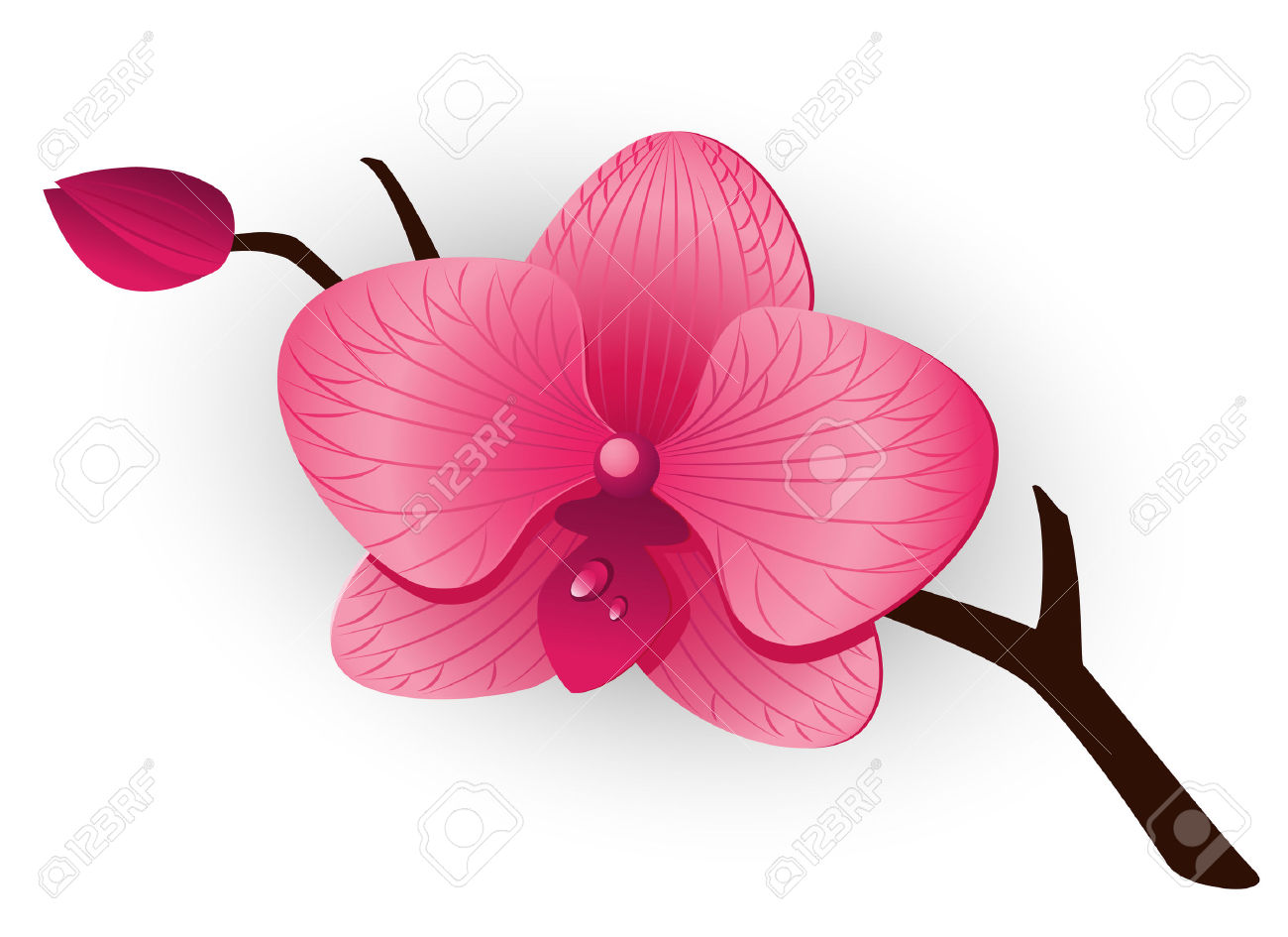 Beautiful Pink Orchid Over White. Royalty Free Cliparts, Vectors.