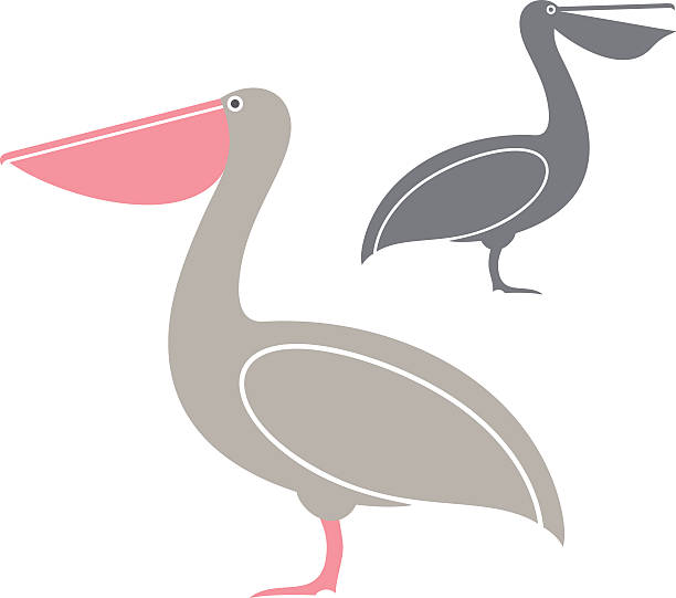 Pink Pelican Clip Art, Vector Images & Illustrations.