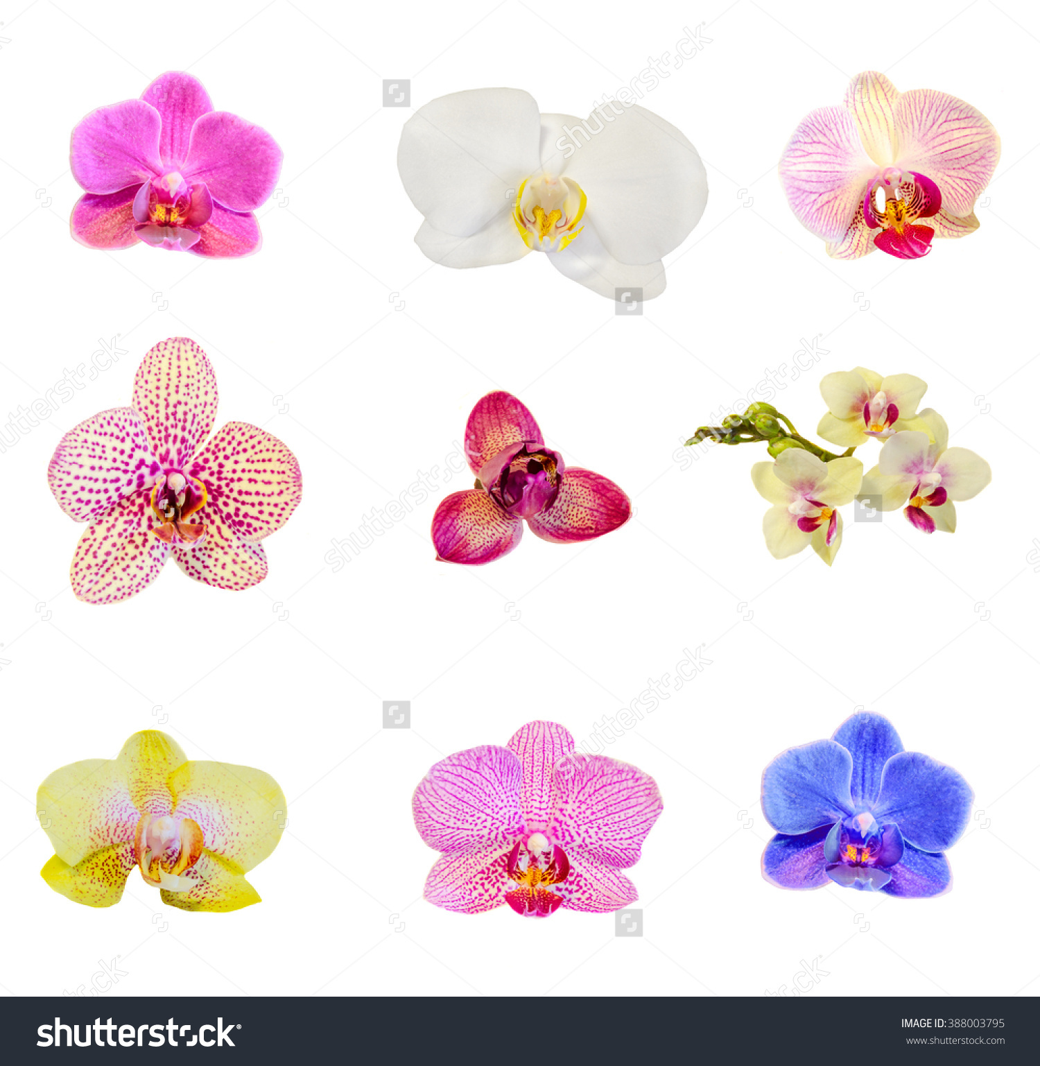 Many Types Collection Orchids Flowers Purple Stock Photo 388003795.