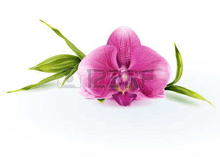 2,593 Phalaenopsis Stock Vector Illustration And Royalty Free.