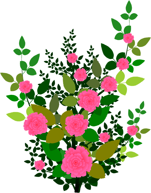 Free Rose Plant with Pink Roses Clip Art.