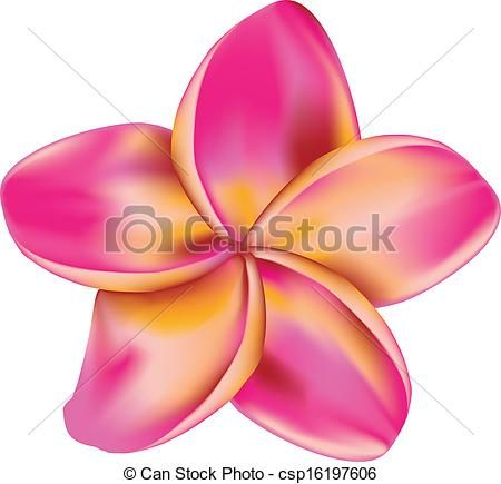 Vector Clipart of Plumeria flower.