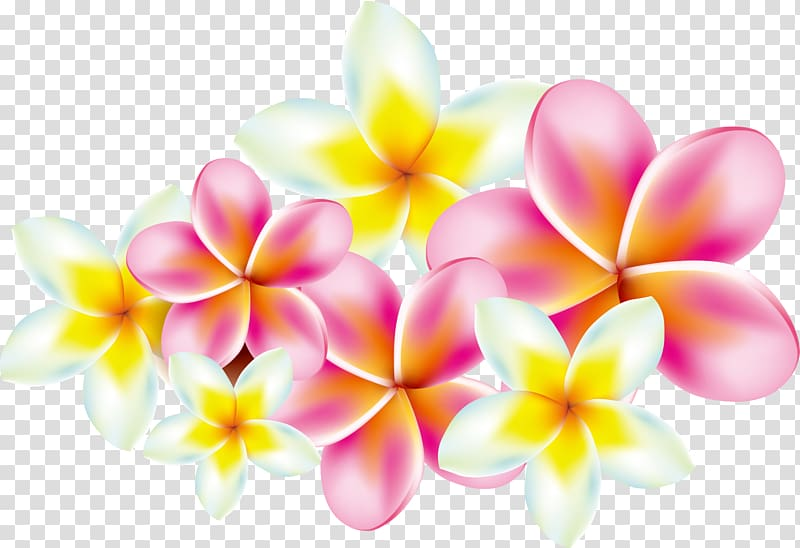 Plumeria transparent background PNG cliparts free download.