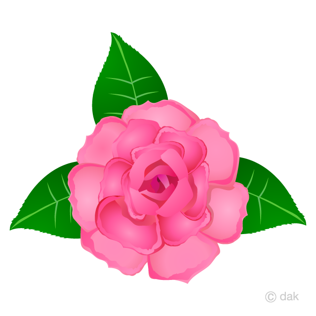 Pink Rose Flower Clipart Free Picture|Illustoon.