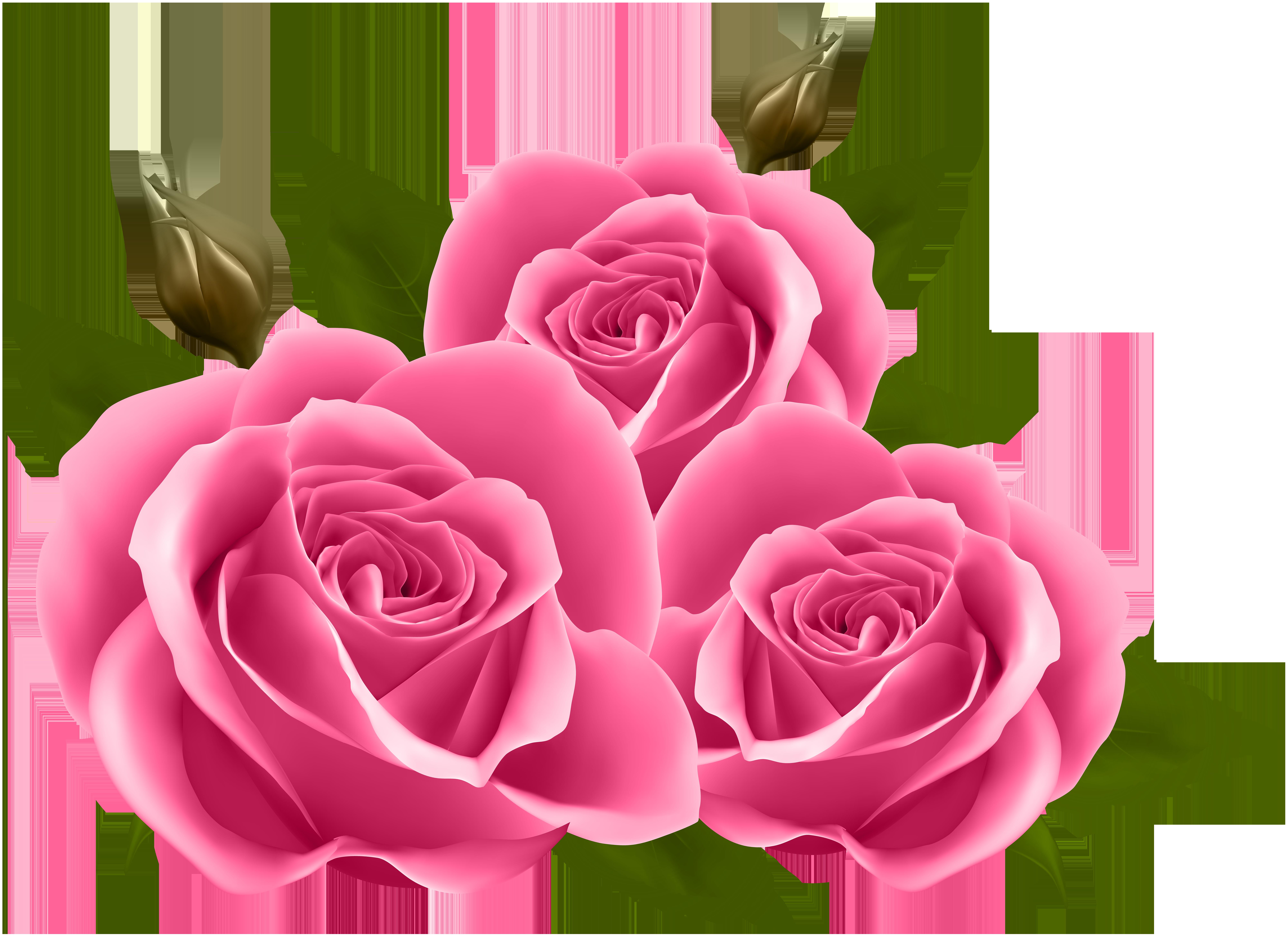 Pink Roses PNG Clip Art Image.
