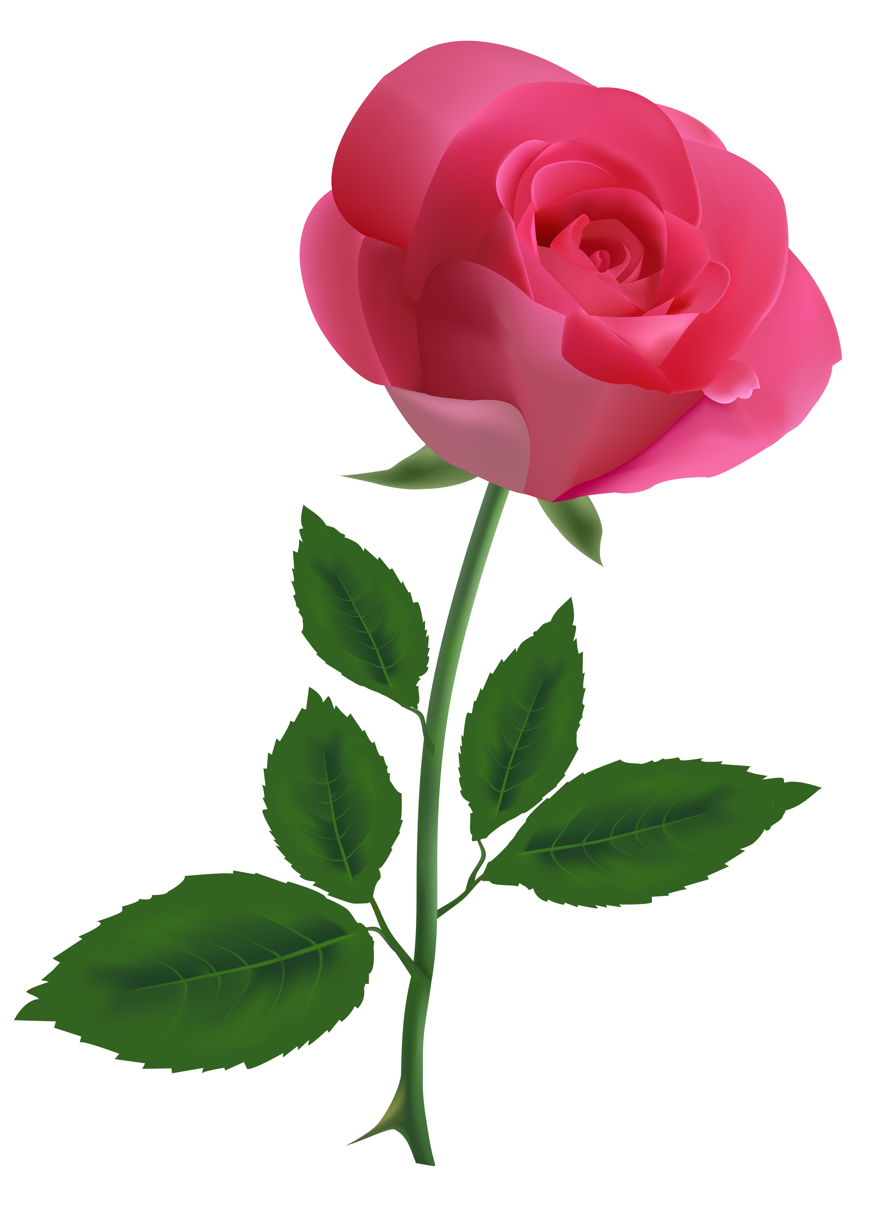 Pink Rose Clipart PNG Image.
