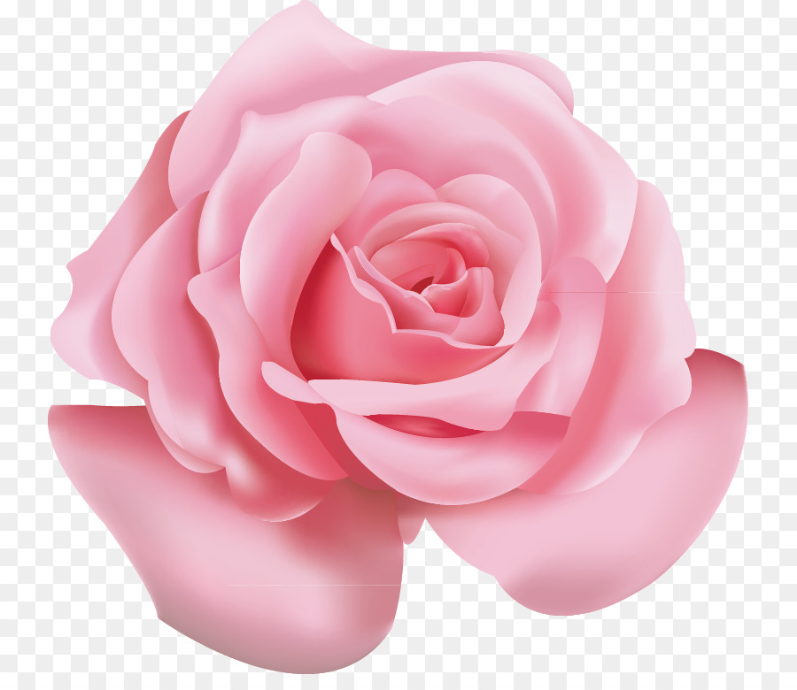 Download Free png Beach rose Pink Flower Icon Pink roses png.