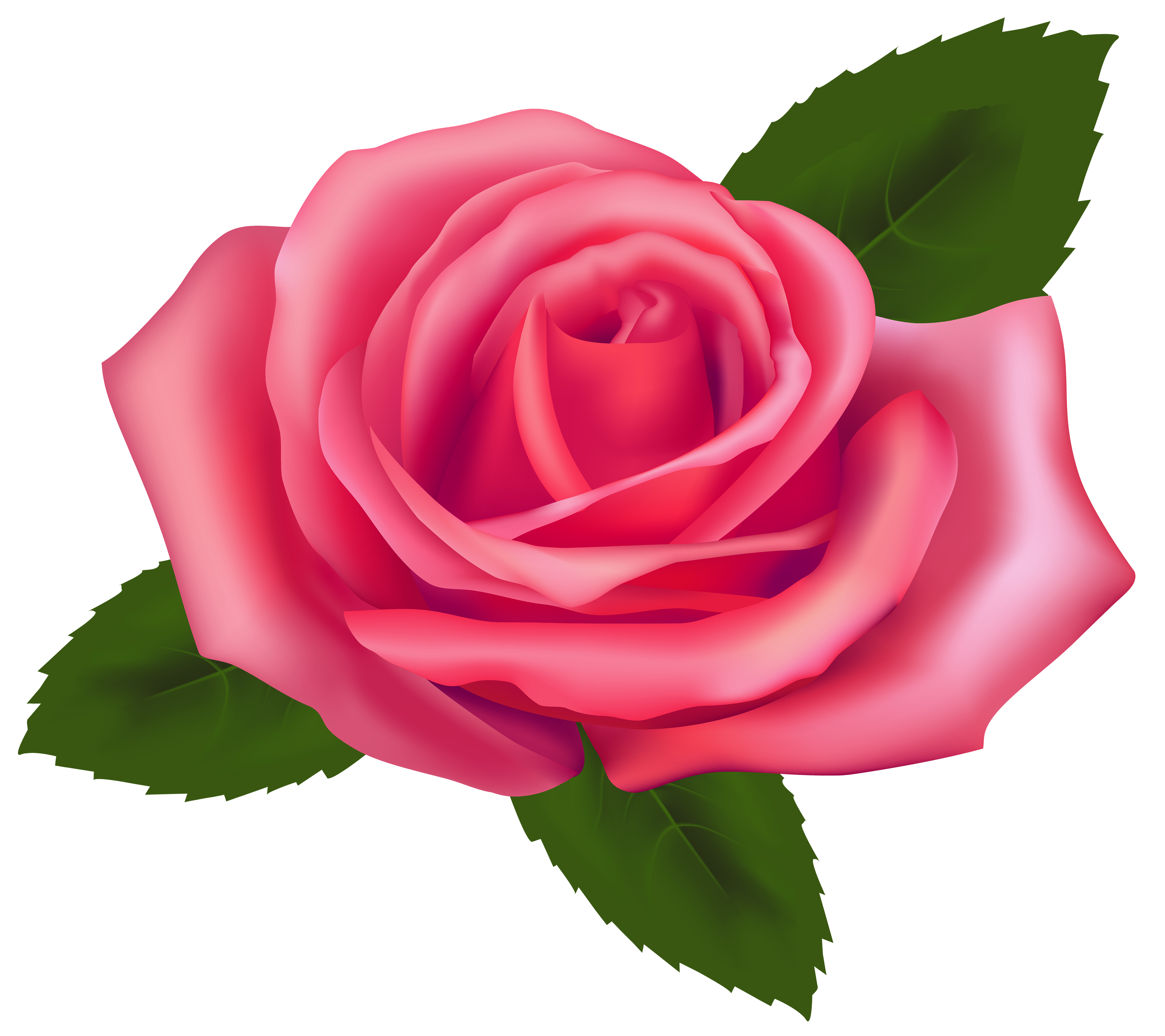 Beautiful Pink Rose PNG Clipart.