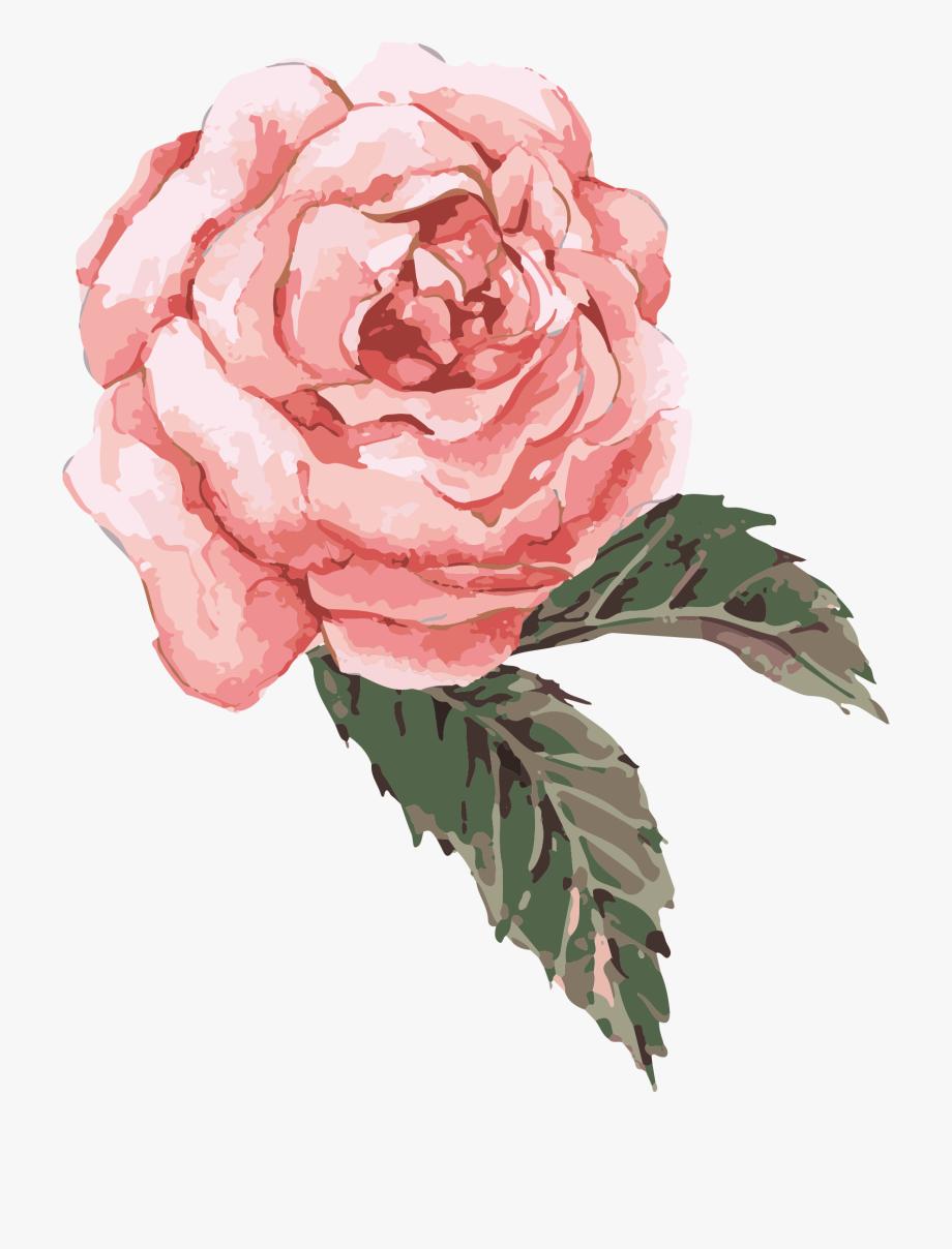 Clip Art Transparent Watercolor Roses Clipart.