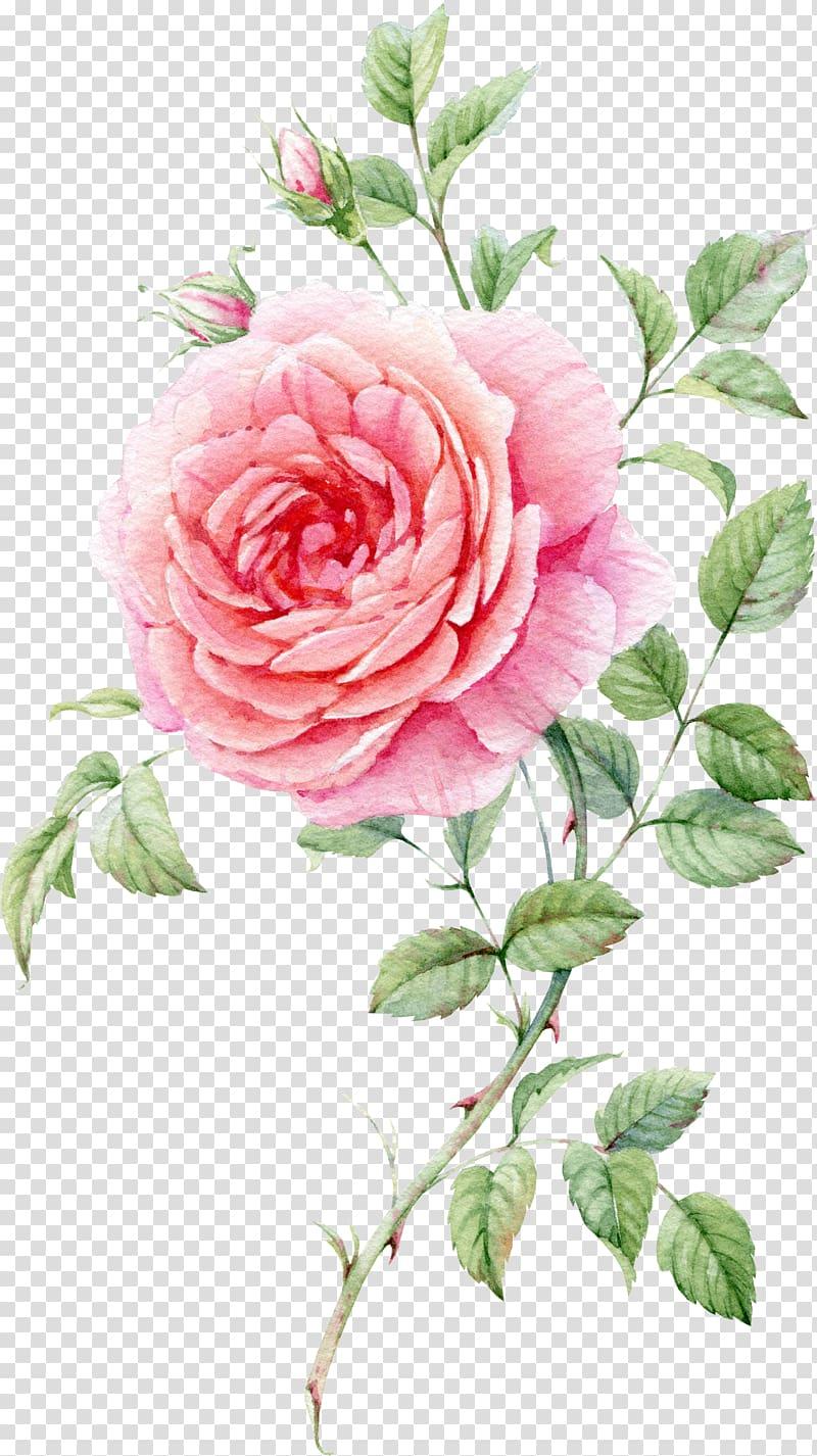 Still Life: Pink Roses Watercolor painting, Watercolor.
