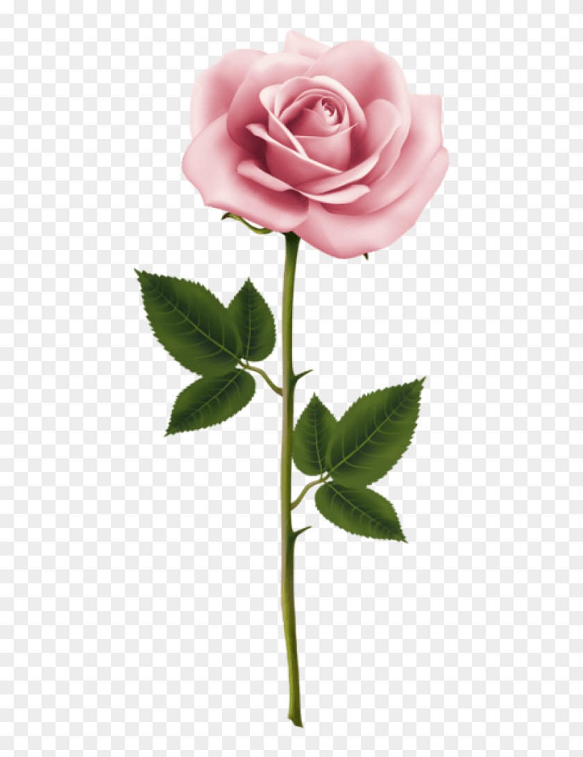 Free Png Download Pink Rose Png Images Background Png.