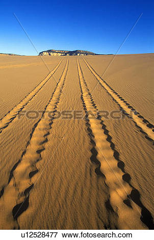 Picture of Off road vehicle tracks at Coral Pink Sand Dunes State.