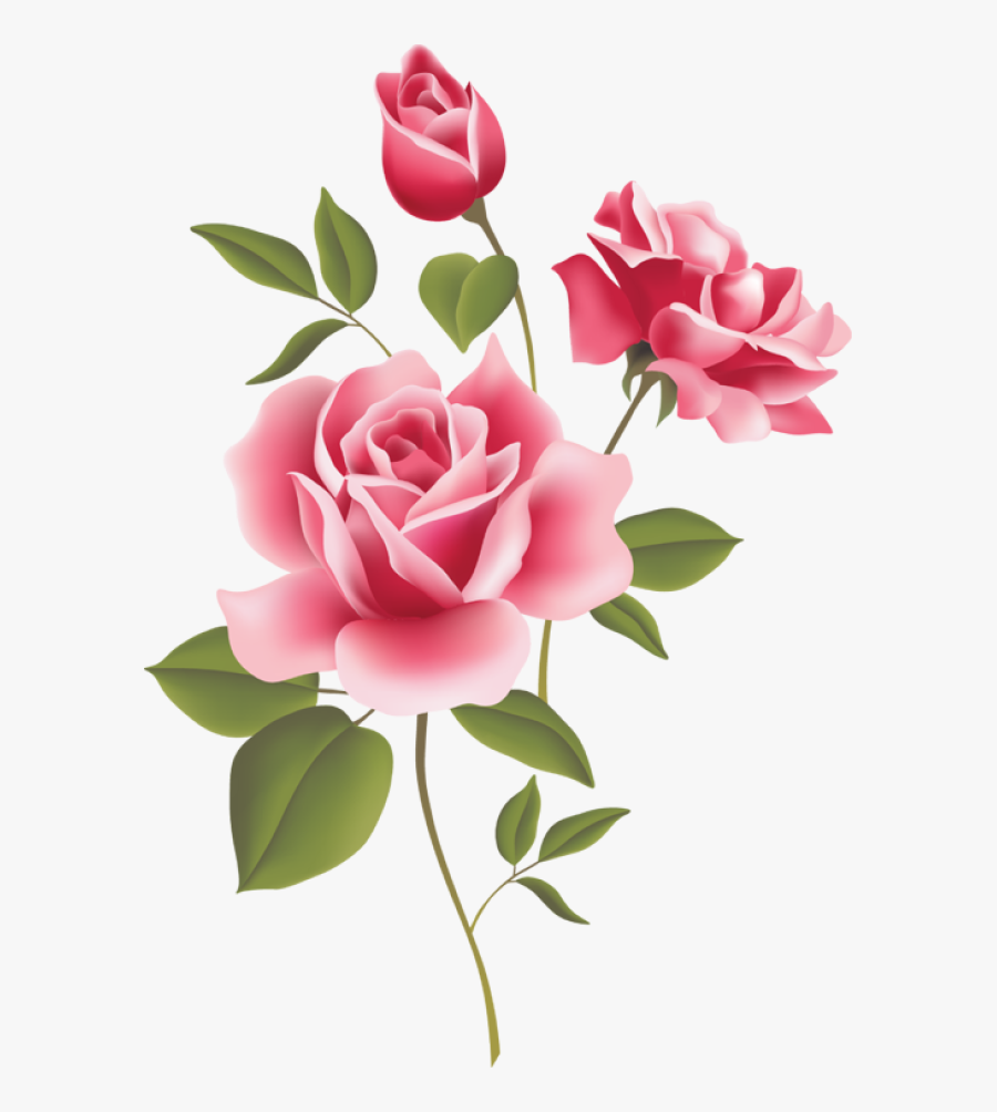 Pink Tea Rose Border Png , Free Transparent Clipart.