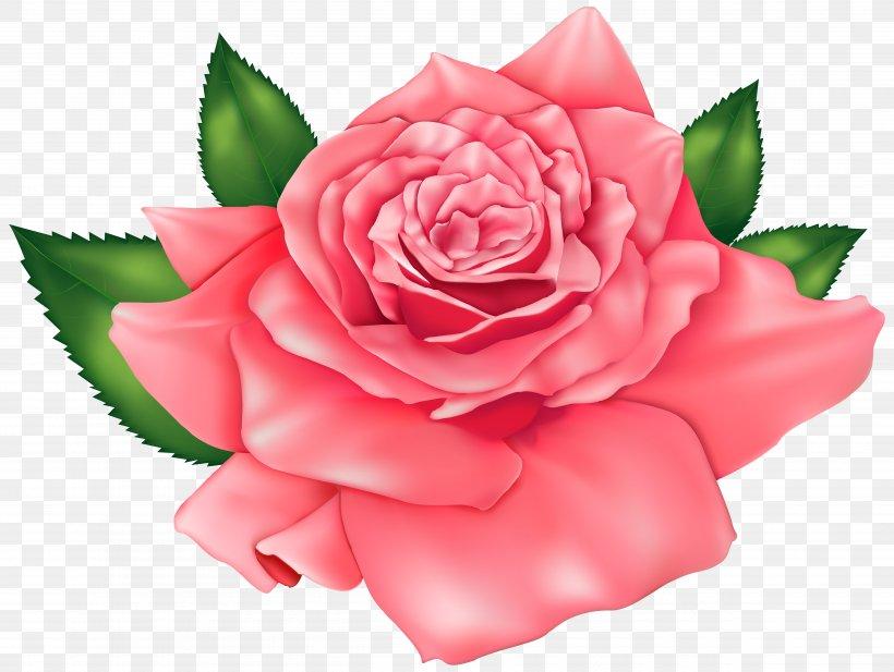 Rose Pink Clip Art, PNG, 5000x3767px, Rose, Blog, Camellia.