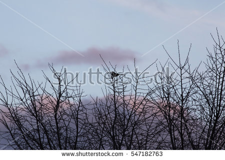 Bird Photographs Stock Photos, Royalty.