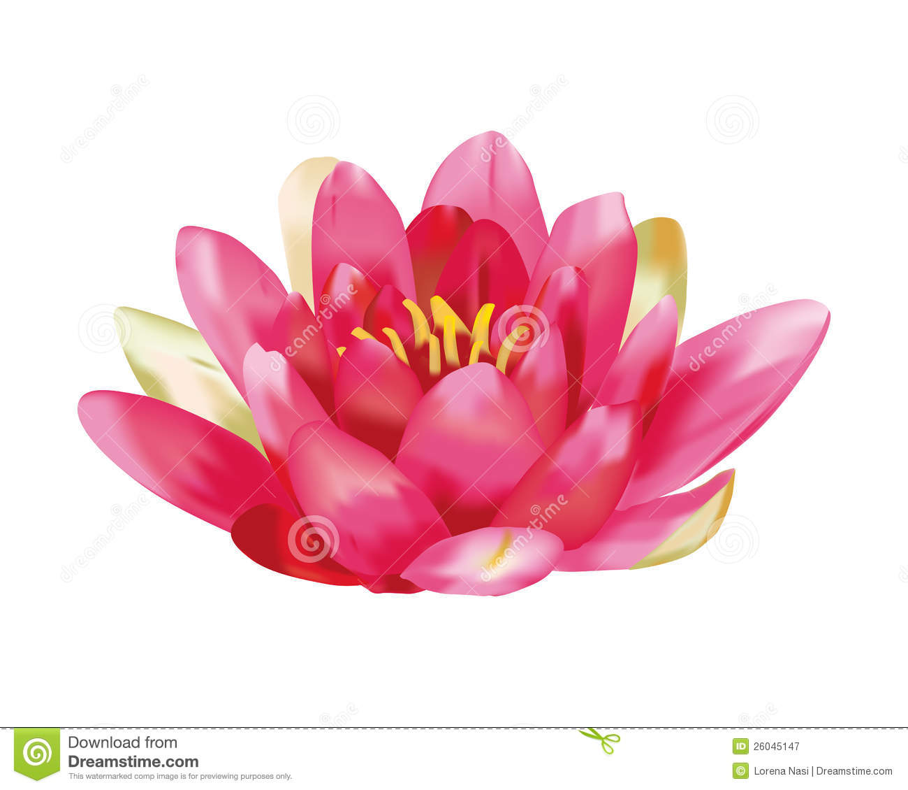 Water Lily Images Free.