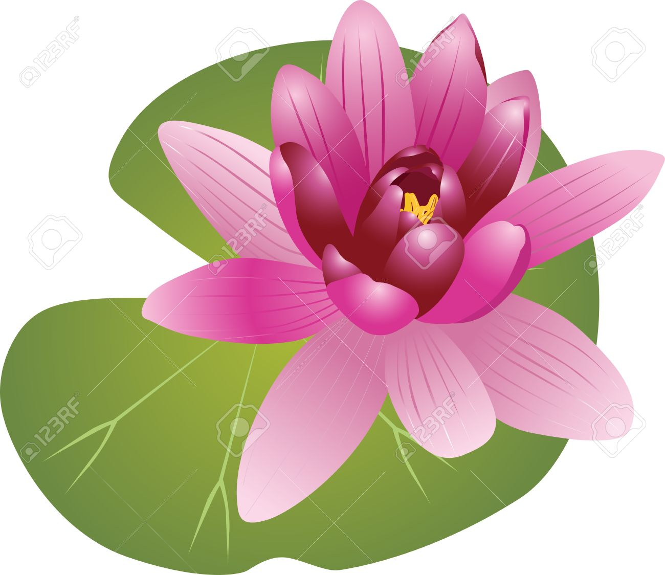 pink water lily clipart clipground