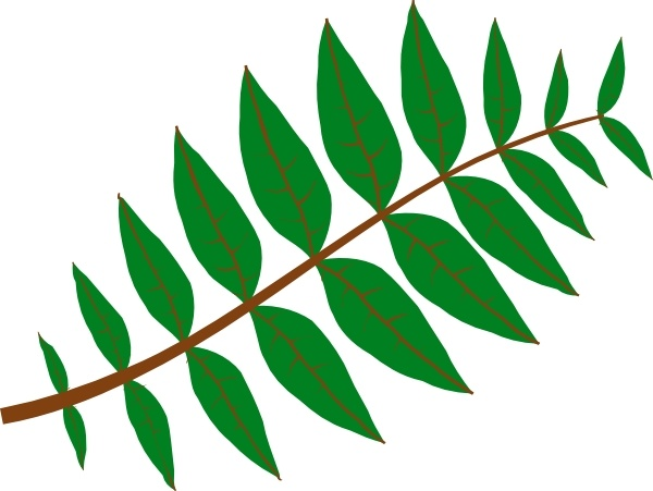 Pinnate Leaf clip art Free vector in Open office drawing svg.