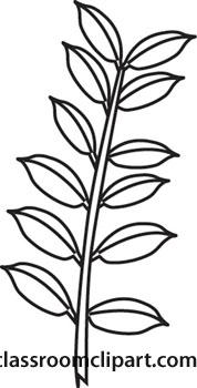 Plants : leaf.