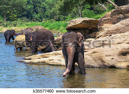 Stock Photography of Elephant Sri Lanka park Pinnawala k35577460.