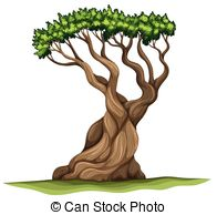 Pinophyta clipart #20