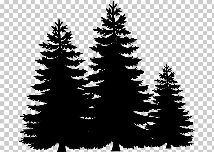 Tres siluetas de pinos, abeto de pino, contorno de árbol.