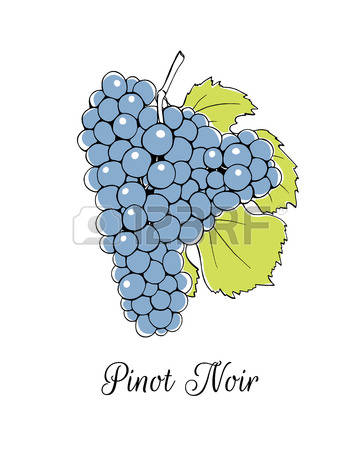 183 Noir Pinot Cliparts, Stock Vector And Royalty Free Noir Pinot.