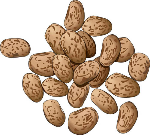 Beans clipart pinto bean, Beans pinto bean Transparent FREE.
