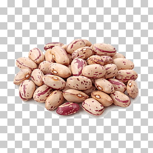 65 pinto Bean PNG cliparts for free download.