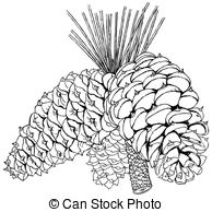 Pinus Illustrations and Clip Art. 62 Pinus royalty free.